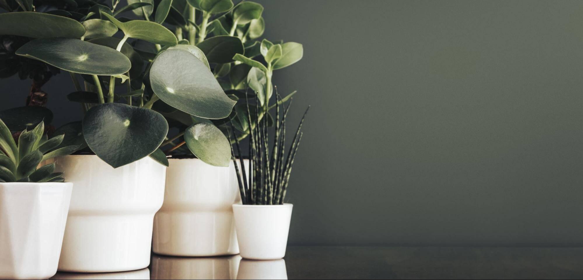 室內設計風格-植栽